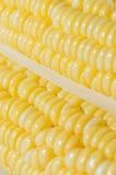 Kukurydzany zbliżenie Obrazy Royalty Free