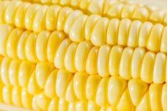 Kukurydzany zbliżenie Obraz Royalty Free