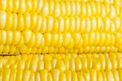 Kukurydzany zbliżenie Zdjęcie Stock