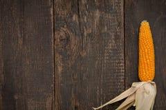 Kukurydzany (Zea Maj) zakończenie Obrazy Royalty Free
