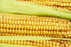 kukurydziane kolby zdjęcia stock