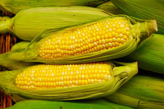 kukurydziane kolby Fotografia Royalty Free