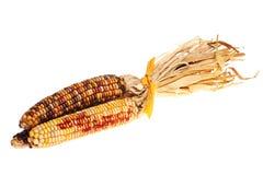 kukurydziany hindusów dekoracyjny Zdjęcia Stock