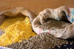 kukurydziany zwierzęcego jedzenie Obrazy Royalty Free