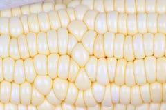 Kukurydzy świeży cob Obraz Royalty Free