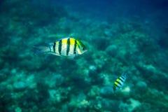 Kulör fisk i Stilla havet Arkivbilder
