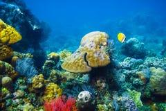 Kulör fisk och koraller i havet Royaltyfri Fotografi