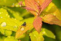 Kulör fluga på gräset Arkivfoto