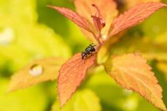 Kulör fluga på gräset Royaltyfri Fotografi