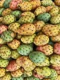 Kulör frukt av kaktuns för taggigt päron royaltyfri fotografi