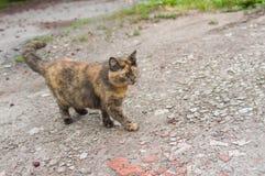 Kulör katt tre på en gata Royaltyfri Fotografi