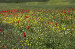 kulör lawn Royaltyfria Bilder