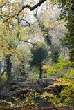kulör liggande för höst nära flodtrees royaltyfria bilder