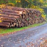 kulör staplade treestammar för fall skog Arkivbilder