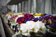 Kulöra blommor arkivfoto