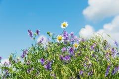 Kulöra blommor i grönt gräs arkivfoto