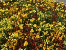 Kulöra blommor i vår royaltyfria bilder