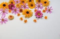 Kulöra blommor på en vit bakgrund Royaltyfri Foto