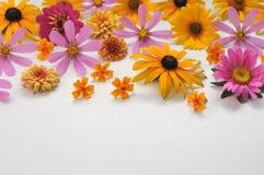 Kulöra blommor på en vit bakgrund Royaltyfri Bild