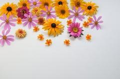 Kulöra blommor på en vit bakgrund Royaltyfria Bilder