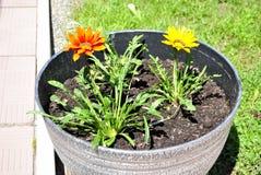 Kulöra dekorativa blommor Royaltyfri Fotografi