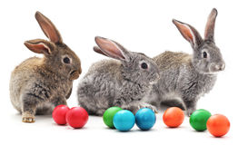 kulöra easter för kaniner ägg royaltyfri foto
