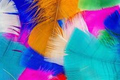 kulöra fjädrar Arkivbild
