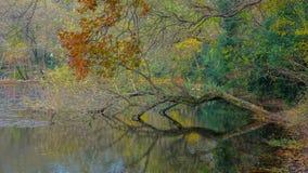 Kulöra flodträn Arkivbild