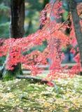 Kulöra leaves royaltyfri bild