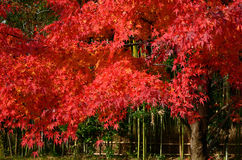 kulöra leaves arkivfoto