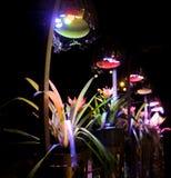 Kulöra ljus och träd arkivfoton