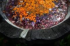 Kulöra sidor med droppar av dagg i vattnet Royaltyfri Fotografi