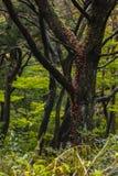 Kulöra sidor på ett träd Fotografering för Bildbyråer