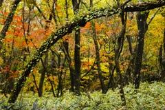Kulöra sidor på träd Arkivfoto