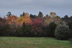 Kulöra träd för höst i en liten skog Royaltyfri Foto