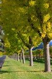 Kulöra trees för härlig fall Royaltyfri Bild