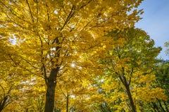 Kulöra trees i den Dresden Tysklandet Royaltyfria Bilder
