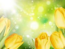 Kulöra tulpan för guling 10 eps Arkivbild