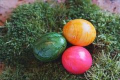 Kulöra verkliga easter ägg på verklig grön mossa Royaltyfri Fotografi