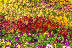 Kulört blommafält Arkivbild