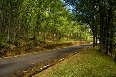 Kulört landskap av en väg i början av hösten royaltyfria foton