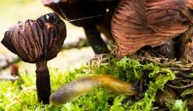 Kula på miljögastropodblötdjuret Arkivbilder