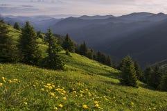 Kula ziemska kwiatu łąki w Velka Fatra Fotografia Stock