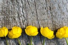 Kula ziemska kwiaty na drewnianym tle fotografia royalty free
