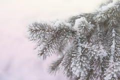 Kulić się jodeł gałąź Zimy plamy tło Mrozowy drzewo fotografia stock
