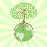 kuli ziemskiej drzewo Zdjęcie Stock