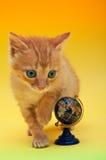kuli ziemskiej figlarki pomarańcze Fotografia Stock