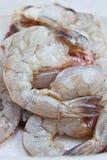 kulinarna świeża garnela Zdjęcie Royalty Free
