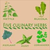 Kulinarni ziele ustawiający Obrazy Stock