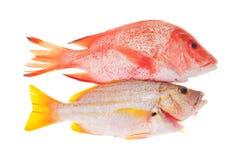 kulinarny surowy ryba przygotowywający Zdjęcia Stock